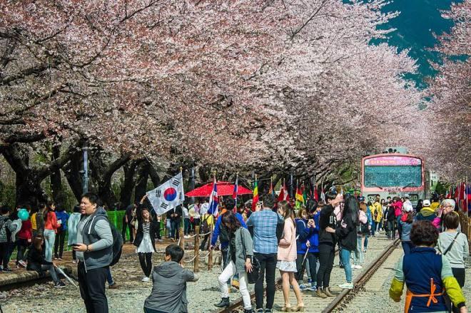 """saison Cherry Blossom en Corée (© photocoen) """"data-recalc-dims ="""" 1 """"/> </p> <p> <em> Intéressé de lire plus sur notre voyage en Corée du Sud? Retrouvez toutes les histoires ici. </em> </p> <p> <strong> Plus d'histoires d'aventures Landcruising: </strong> <!-- Developer mode initialisation; Version: 1.2.9;Relation: no; All categories: ;Only with thumbnails;Found 4 posts;Basic sizes;Got sizes 150x150;Post-thumbnails enabled in theme;Post has thumbnail 5859;Postthname: thumbnail;Image URL: https://i2.wp.com/www.landcruisingadventure.com/wp-content/uploads/2013/05/cbw_20130420_Bolivia_P1463_L.jpg?resize=150%2C150;Using title with size 100. Using excerpt with size 0;Post-thumbnails enabled in theme;Post has thumbnail 15307;Postthname: thumbnail;Image URL: https://i2.wp.com/www.landcruisingadventure.com/wp-content/uploads/2015/03/00-feature-travel-page-col.jpg?resize=150%2C150;Using title with size 100. Using excerpt with size 0;Post-thumbnails enabled in theme;Post has thumbnail 13208;Postthname: thumbnail;Image URL: https://i0.wp.com/www.landcruisingadventure.com/wp-content/uploads/2014/12/cbw_20141216_colombia_N4166_L.jpg?resize=150%2C150;Using title with size 100. Using excerpt with size 0;Post-thumbnails enabled in theme;Post has thumbnail 17516;Postthname: thumbnail;Image URL: https://i1.wp.com/www.landcruisingadventure.com/wp-content/uploads/2015/12/cbw_20070228_Uruguay_0373_L.jpg?resize=150%2C150;Using title with size 100. Using excerpt with size 0;Plugin execution time: 0.05026388168335 sec; --> </div> </pre> <div class='yarpp-related'> <h3>Articles similaires:</h3> <div class="""