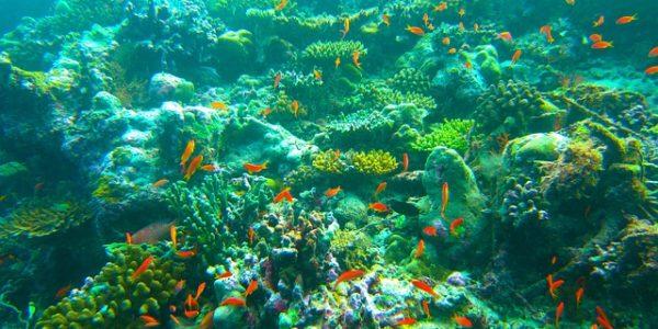 Vacances aux Maldives : les spots de plongée à découvrir