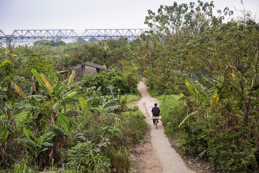 champs de bananiers Hanoï - Vietnam © Marta Nascimento