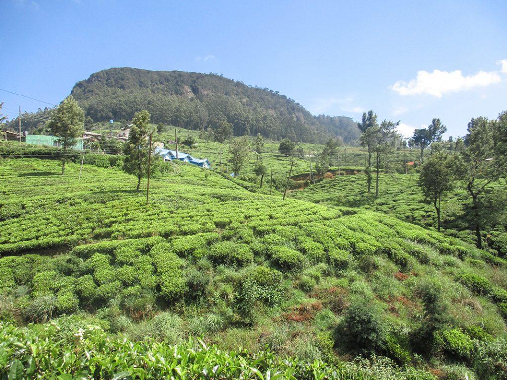 Nuwara Eliya, Sri Lanka © Tiphaine Leblanc et Coralie Vespieren