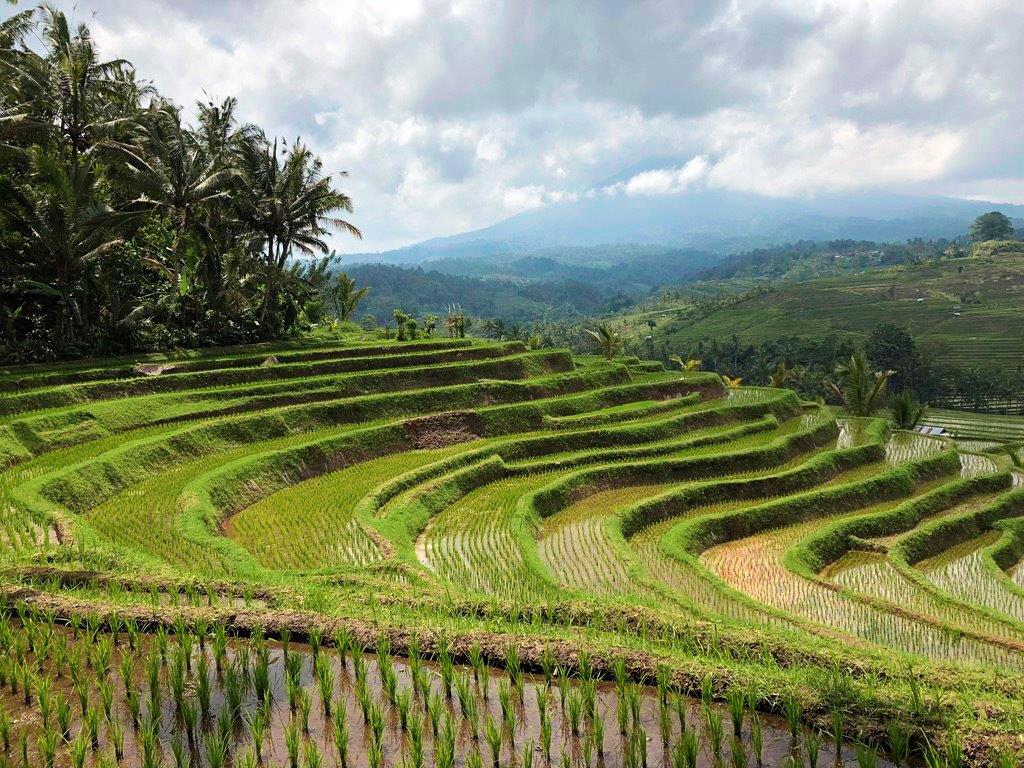 Rizières - Bali - Indonésie © Joel Le Coz